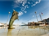 harbour_dolphin