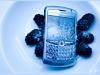 berry_berry1-copy
